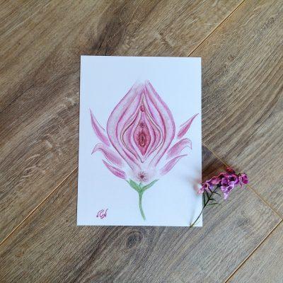 איור 'הפרח הנשי' בגלויה