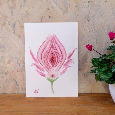 איור 'הפרח הנשי' הדפס להדרכה